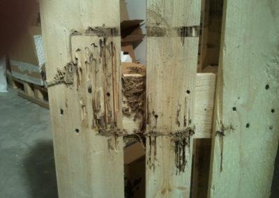 Ataque de termitas